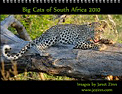 Big Cats of South Africa Calendar